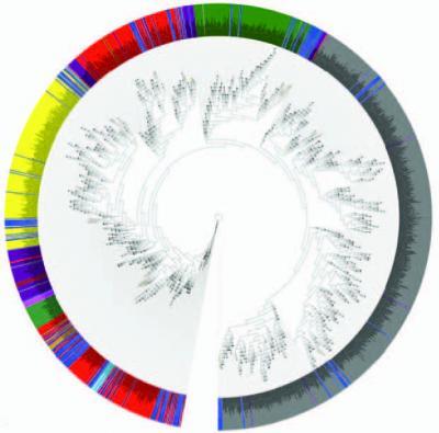 16s rdna序列的系统进化树