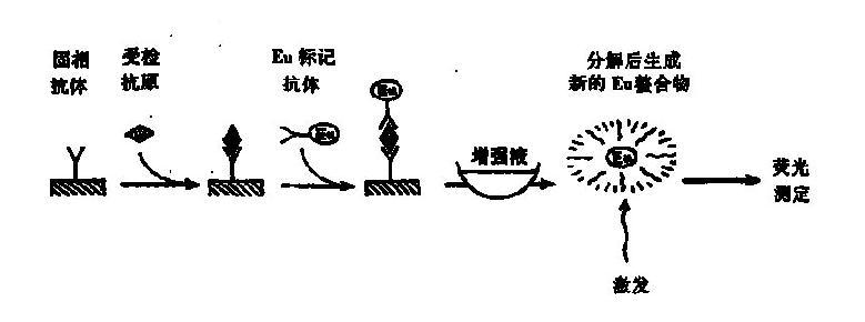 一、时间分辨荧光免疫测定 以常用荧光素作为标记物的荧光免疫测定往往受血清成分、试管、仪器组件等的本底荧光干扰,以及激发光源的杂射光的影响,使灵敏度受到很大限制。时间分辨荧光免疫测定(timeresolvedfluorescenceimmunoassay,TR-FIA)是针对这缺点加以改进的一种新型检测技术。其基本原理是以镧系元素铕(Eu)螯合物作荧光标记物,利用这类荧光物质有长荧光寿命的特点,延长荧光测量时间,待短寿命的自然本底荧光完全衰退后再行测定,所得信号完全为长寿命镧系螯合物的荧光,从而有效地消除非