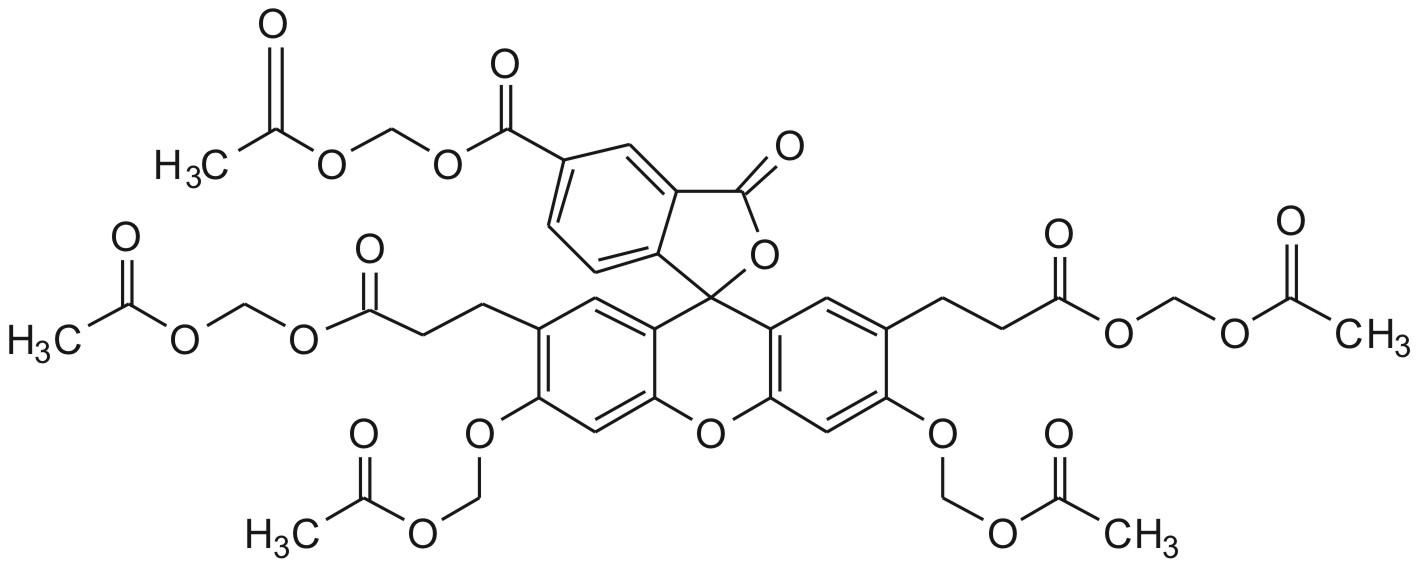 bcecf, am不仅被广泛用于哺乳动物细胞的研究,也有报道用于动物